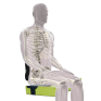 Pelvic stability with cushion & back